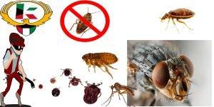 خدمة مكافحة حشرات و الآفات المنزلية